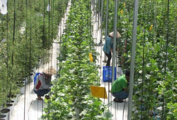 Businesses short of land fund to develop hi-tech applied agriculture