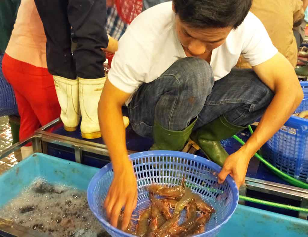 Shrimp price increases but breeders do not have shrimp for sale