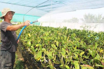 Flower farmers busy in preparation for Tet holiday