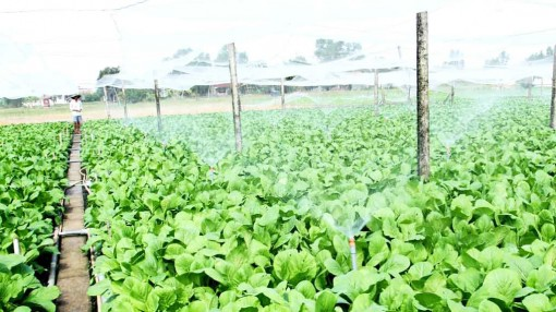 Long An encourages farmers in applying high-tech to agricultural production