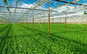 Vietnam, France share experience in organic farming production