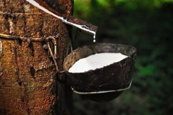 Thailand to issue bonds to support rubber farmers