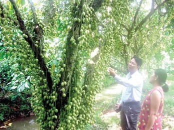 Mekong delta promotes Agritourism with farmer participation
