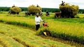 Vietnam announces 13 national key agricultural products