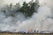 Long An focuses on preventing and controlling forest fire