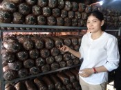 Start-up  from growing abalone mushrooms