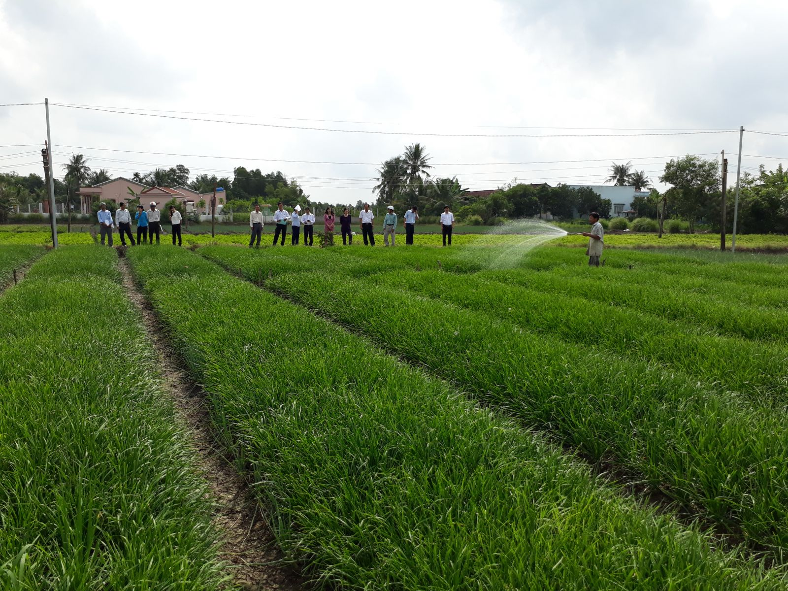 Focusing on high-tech application agricultural production in association with restructuring agricultural sector