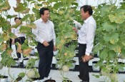 Long An transforms plants and animals vigorously after 3 years of developing hi-tech agriculture
