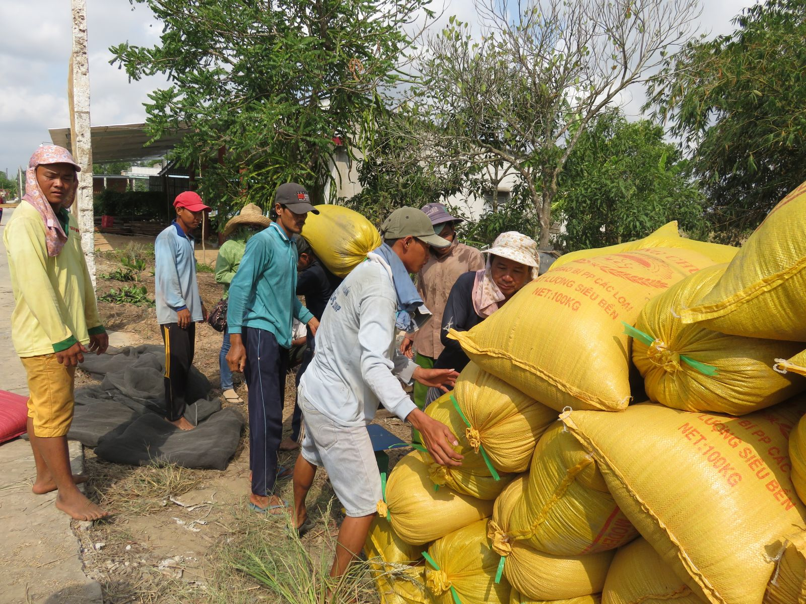 Up to now, the harvested rice has reached over 2,605 million tons, accounting for 94.7 percent of the plan of 2.75 million tons