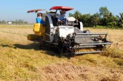 Long An: In 2020, growth rate of Agriculture strives to reach 1.5%