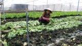Women improved knowledge,  provided capital to apply hi-tech in vegetable planting