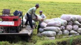 Food security is ensured as an important task in any situation