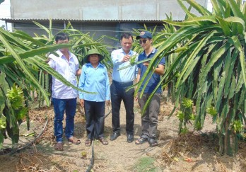 Chau Thanh aims to improve quality of dragon fruits