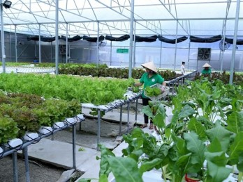 Can Tho moves to enhance efficiency of vital hi-tech urban agricultural models