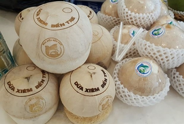 Ben Tre province's green Xiem coconut, which received Geographical Indication certification from the National Office of Intellectual Property of Vietnam (Photo: VNA)