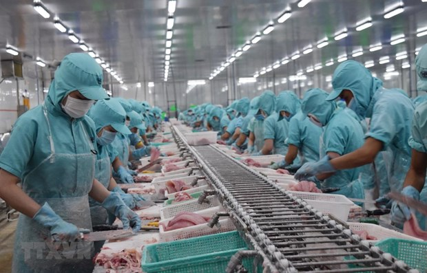 Tra fish processing for export in the Mekong Delta province of Ca Mau (Source: VNA)