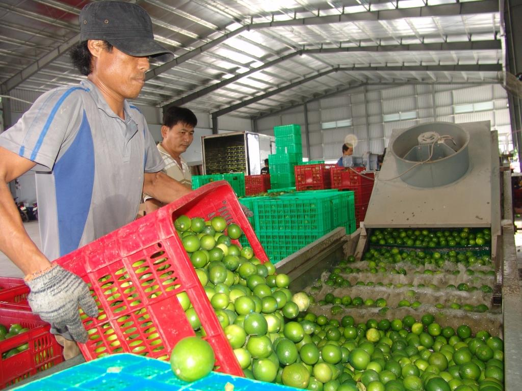 Lemon price is quite high compared to previous years