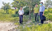 Tan Hung proposes to support border planting protective forests